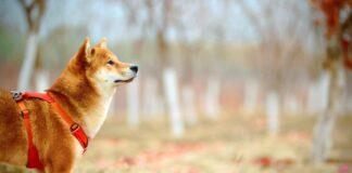 Dogecoin [DOGE] Struggles To Strengthen Foothold Despite Surging To $0.30